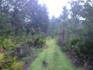 SoliVita conservation area
